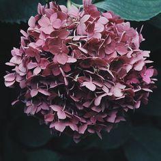 Les sublimes fleurs