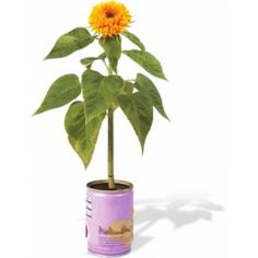 FLOWER IN A TIN #4th wedding anniversary gift ideas http://www.giftgenies.com/presents/plant-in-a-tin