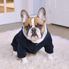 Barkley Dog Hoodie | Rocky & Julio