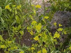 Kuvahaun tulos haulle jänönputki