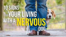 10 Tips for Living with a Nervous DogBY Katie Shannon @pet_IQLiving with a nervous dog is a challenging problem. Owners need to be realistic about their goals and what outcome they desire. Not every dog can learn to be completely comf...