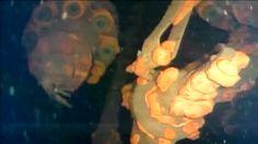 (adsbygoogle = window.adsbygoogle || []).push();   Un robot sumergido en el interior del reactor 3 de la central nuclear de Fukushima detectó lo que podrían ser restos de combustible fundido en la planta accidentada. La exploración robótica inició el 19 de julio y las...