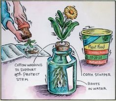 A Hydroponic Gardening Article
