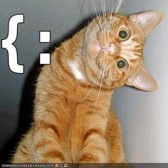 Google Image Result for http://icanhascheezburger.files.wordpress.com/2007/12/funny-pictures-sideways-smiling-cat.jpg