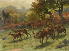 Georges Frédéric Rötig (1873-1961) - Red deer, oil on canvas, 60 x 80 cm.