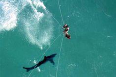 Kite Surfing potential problem, shark!!!