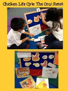 Little Bird Kindergarten Blog Post: Chicken Life Cycle - The oral retell