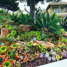17 Small Front Yard Landscaping Ideas To Define Your Curb Appeal These basic yet smart front yard landscaping ideas design ideas will point you in the right direction. Small Front Yard Landscaping, Succulent Landscaping, Succulent Gardening, Landscaping With Rocks, Planting Succulents, Backyard Landscaping, Landscaping Ideas, Succulent Ideas, Gardening Tips