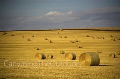Country Bales Canvas Wall Art Farm Harvest