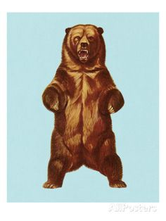 Grizzly Bear Posters by Pop Ink - CSA Images at AllPosters.com
