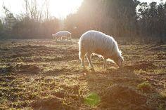 Presentazione del progetto - Rete dei Santuari di Animali Liberi in Italia