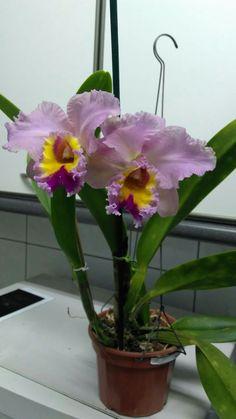 Orchids <3