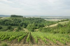 Austria, Html, Portal, Vineyard, Outdoor, Wine, Landscape, Vacation, Outdoors