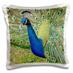 3dRose USA, Florida, Orlando, male peacock, Gatorland., Pillow Case, 16 by 16-inch, Multicolor Male Peacock, Cream Area Rug, Orlando Florida, Pillow Cases, Pillows, Prints, Walmart, Usa, Products