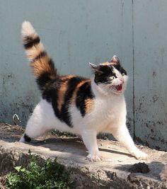 Great cat photo