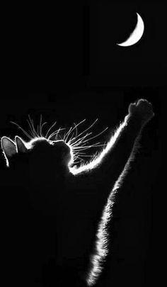 Черная кошка.Мистика и реальность - 27 Апреля 2013 - (я подарю тебе звезду)