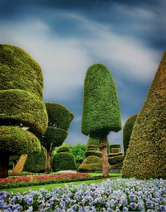 Levens Hall Gardens, Cumbria.  The oldest topiary garden in England. It's like Alice in Wonderland...