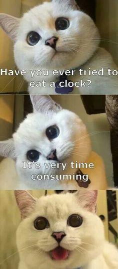Haha, funny cat