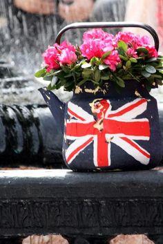British Tea Pot Plant!