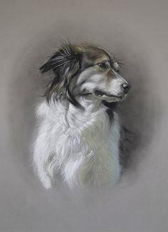 Dog art by Amy Little. Gina, 2014. Soft pastel on paper.