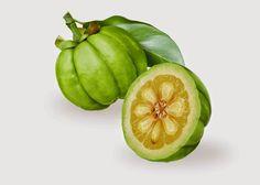 La garcinia cambogia o tamarindo malabar es rico en ácido hidroxicítrico, que actúa en el metabolismo de los azúcares y grasas ayudándonos a mantener la línea.