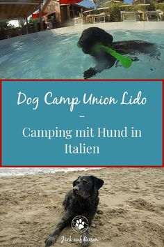 Reiseziele & Urlaub mit Hund Camping with dogs in the Dog Camp Union Lido. Dog pool, dog beach and d Camping Holiday, Winter Camping, Italy Destinations, Holiday Destinations, Union Lido Camping, Cute Camping Outfits, California Beach Camping, Dog Beach, Angeles