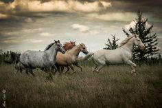 Free ride by Aline CAID WACHTEL