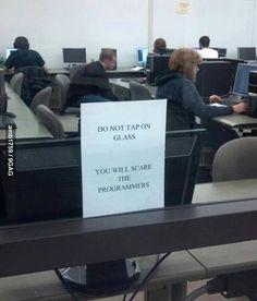Do not tap on the glass, programmer humor Memes Humor, Funny Memes, Tech Humor, Funny Quotes, Programming Humor, Python Programming, Office Humor, Funny Office, Work Humor