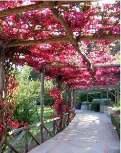 beautiful bougainvillea on pergola or arbor in backyard Backyard Gazebo, Backyard Landscaping, Outdoor Pergola, Balcony Planters, Balcony House, Balcony Railing, Rustic Pergola, Cheap Pergola, Black Pergola