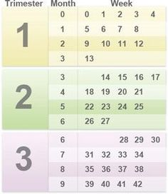 How pregnant am I? Pregnancy by weeks, months, and trimesters   BabyCenter