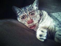 More Nicholas Cage cats.