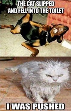 30+ Funny Cat Vs. Dog Memes To Prove Who's The Boss #catmemes #dogmemes - Lovely Animals World