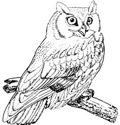 great horned owl - Google Search Owl Coloring Pages, Printable Coloring Pages, Coloring Books, Free Coloring, Bird Drawings, Animal Drawings, Drawing Pics, Native American Horoscope, Pyrography Patterns