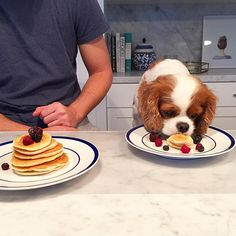 Does your Cavalier rule your house (and your life)? It's not surprising. See how many of these Cavalier problems you can relate to.