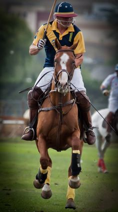 Okanagan Polo Club and horses