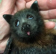 Baby Bat Tiny Derp - your daily dose of funny cats - cute kittens - pet memes - pets in clothes - kitty breeds - sweet animal pictures - perfect photos for cat moms Cute Funny Animals, Cute Baby Animals, Animals And Pets, Funny Cats, Animals Planet, Cute Creatures, Beautiful Creatures, Animals Beautiful, Murcielago Animal