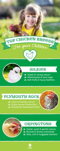 Children and chickens make the best of friends! Your kids will adore caring for their new feathered companions! Find out more about the perfect chicken breeds for your children here, http://www.backyardchickencoops.com.au/which-breed-of-chicken-makes-a-great-pet-for-children #loveyourchickens #kidslovechickens #infographic
