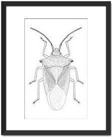 Leaf Bug by Martin Bay - Fine Art Prints - $85.00