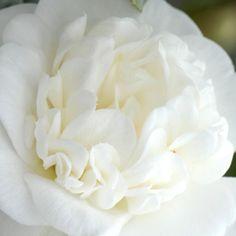 Au coeur du Camellia - La pépinière - Entreprise