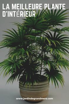 The best plant indoor Decoration Plante, Cool Plants, Plant Decor, My Dream Home, Indoor Plants, Bonsai, Succulents, Home And Garden, Good Things