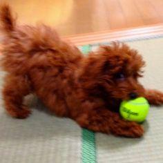 テニスボールが好き