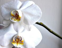 I'm not a huge flower type girl, but, I do love me some Orchids!!!