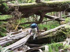 West Coast Trail   west coast trail