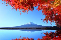 In Images: Japan's Autumn Colours | Insider Journeys Koyo foliage visual prompt