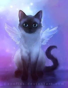 The Cat Fairy.ahhhh My TuXedo.we love you xox Angel cat Siamese Anime Animals, Baby Animals, Cute Animals, Gato Angel, Image Chat, Cute Animal Drawings, Warrior Cats, Cat Drawing, Beautiful Cats