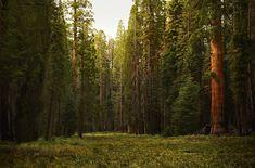 Sequoia National Park [OC] [2000 x 1318] #reddit