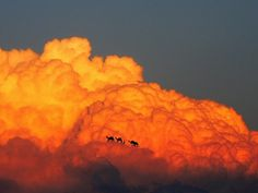 Elio Pallard | Nuvens reimaginadas