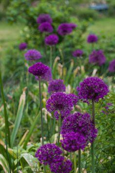 an angel at my table: Trädgårdssällskap ett måste för en trädgårdsnörd