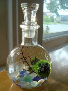 Live Marimo Balls In Mini Globe Bottle Zen Pet Terrarium