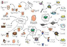 egg vocabulary map